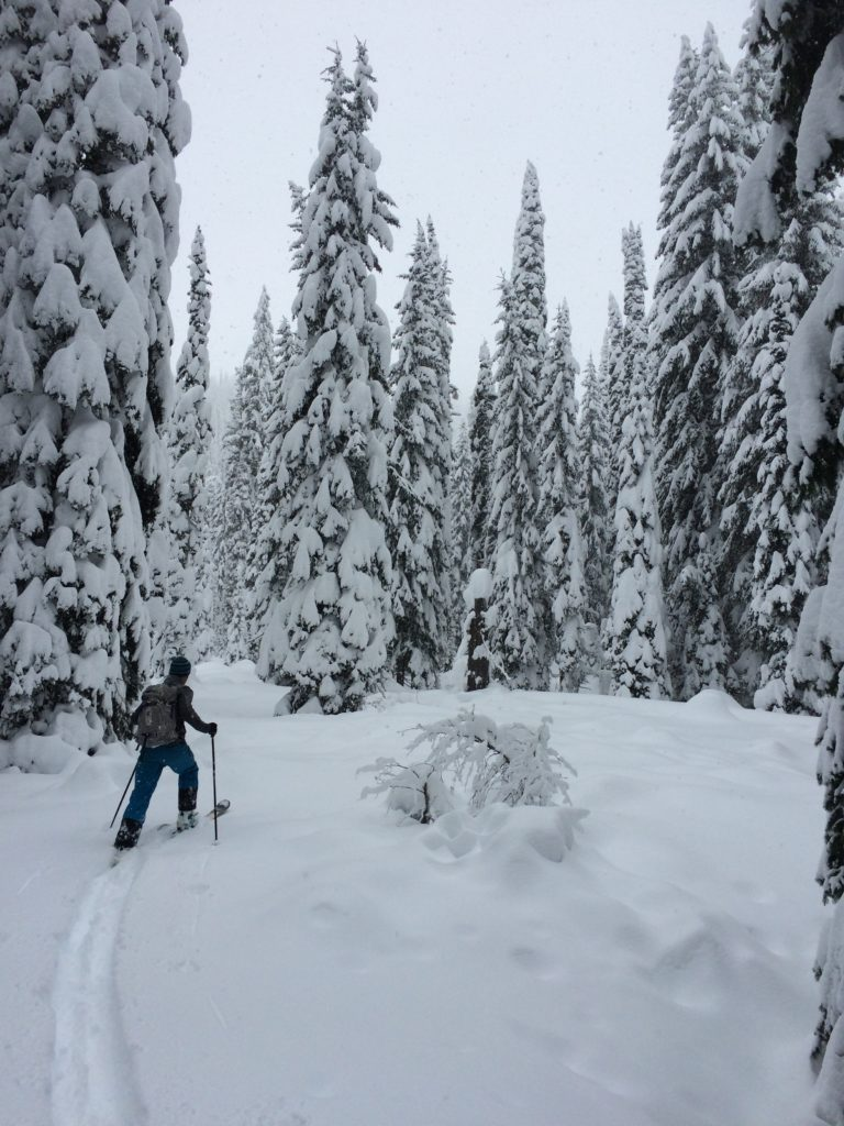Upper Ross Creek Skiier
