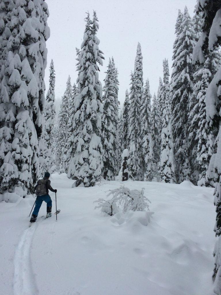 Upper Ross Creek Skiier