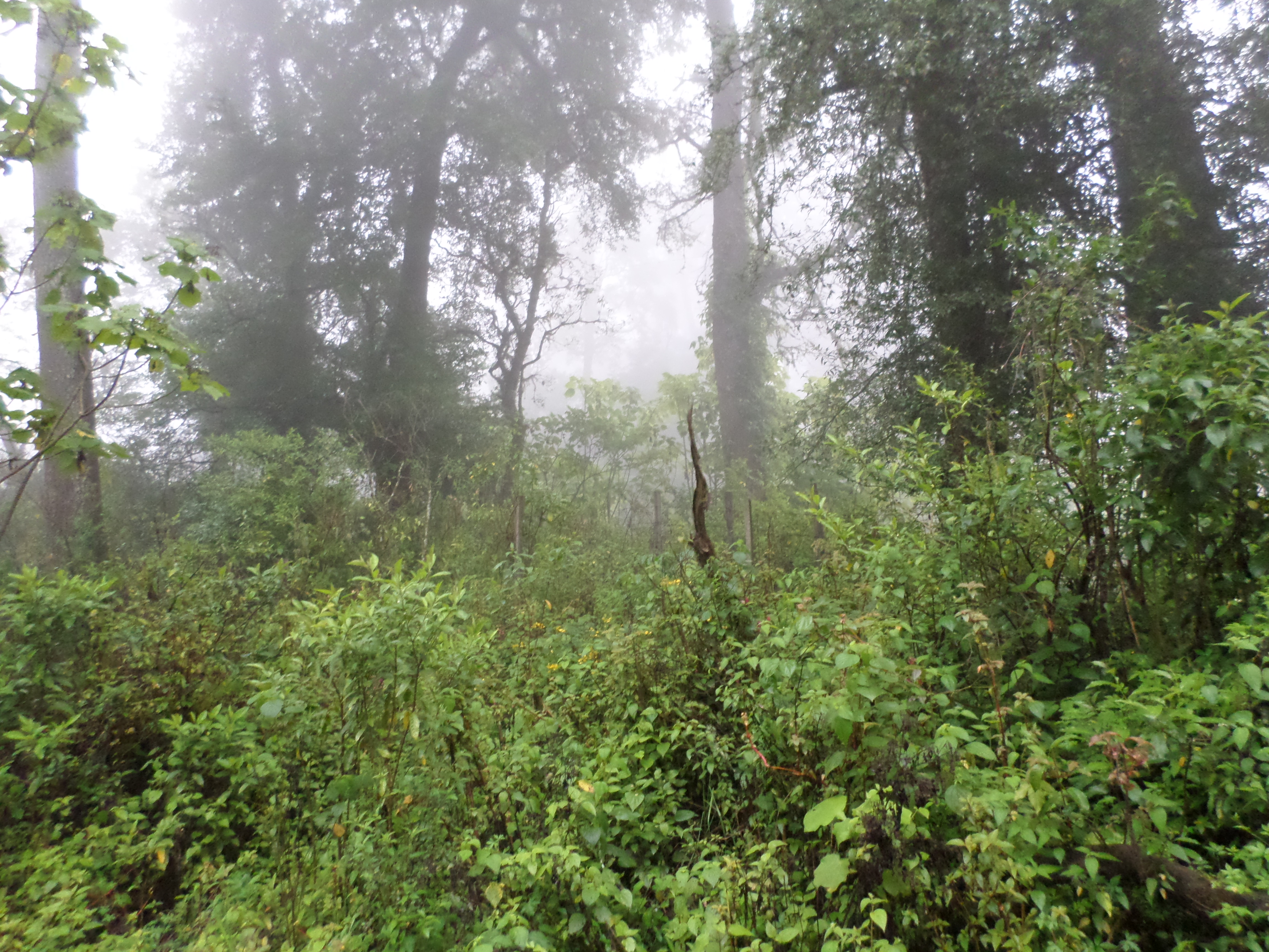 mexicos cloud forest searching for elusive wild cat