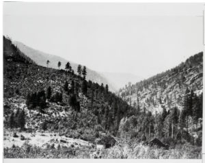 A mirror image of the same area more than 50 years later dominated by Douglas fir and ponderosa pine. To identify the scene Gruell held the photo backwards up to the sun. Photo Date: 1981 Credit: George Gruell (USFS) - Archived at the Mansfield Library at the University of Montana