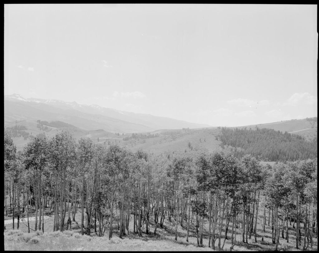 At the same location more than 50 years later aspen stands have diminished. Date: 07/02/1969 Credit: George Gruell (USFS) Bridger-Teton National Forest