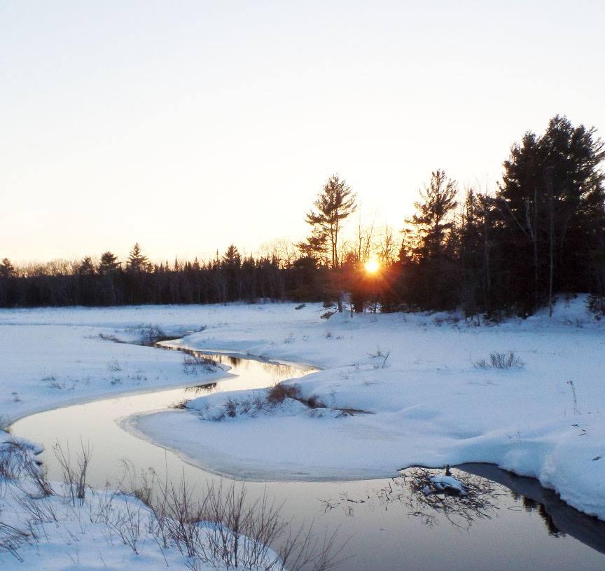 Maine Woodland
