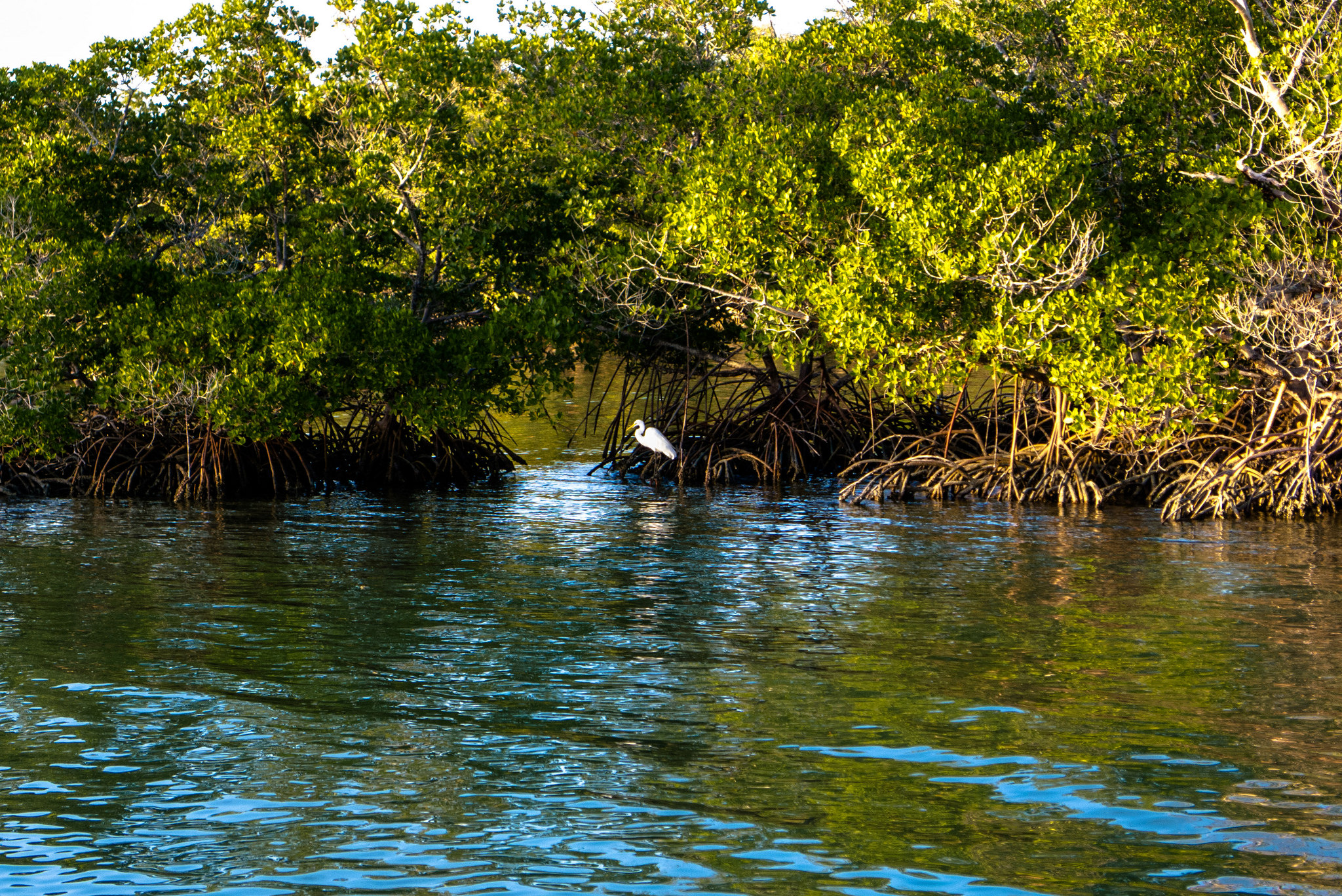 Climate change: Mangrove forests expand range northward as regions warm