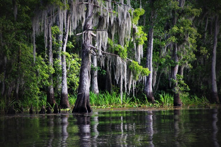 Louisiana pipeline sued over destruction of old-growth cypress, tupelo trees